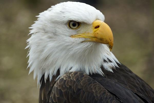 RJ Marketing - Mit Scharfblick wie ein Adler